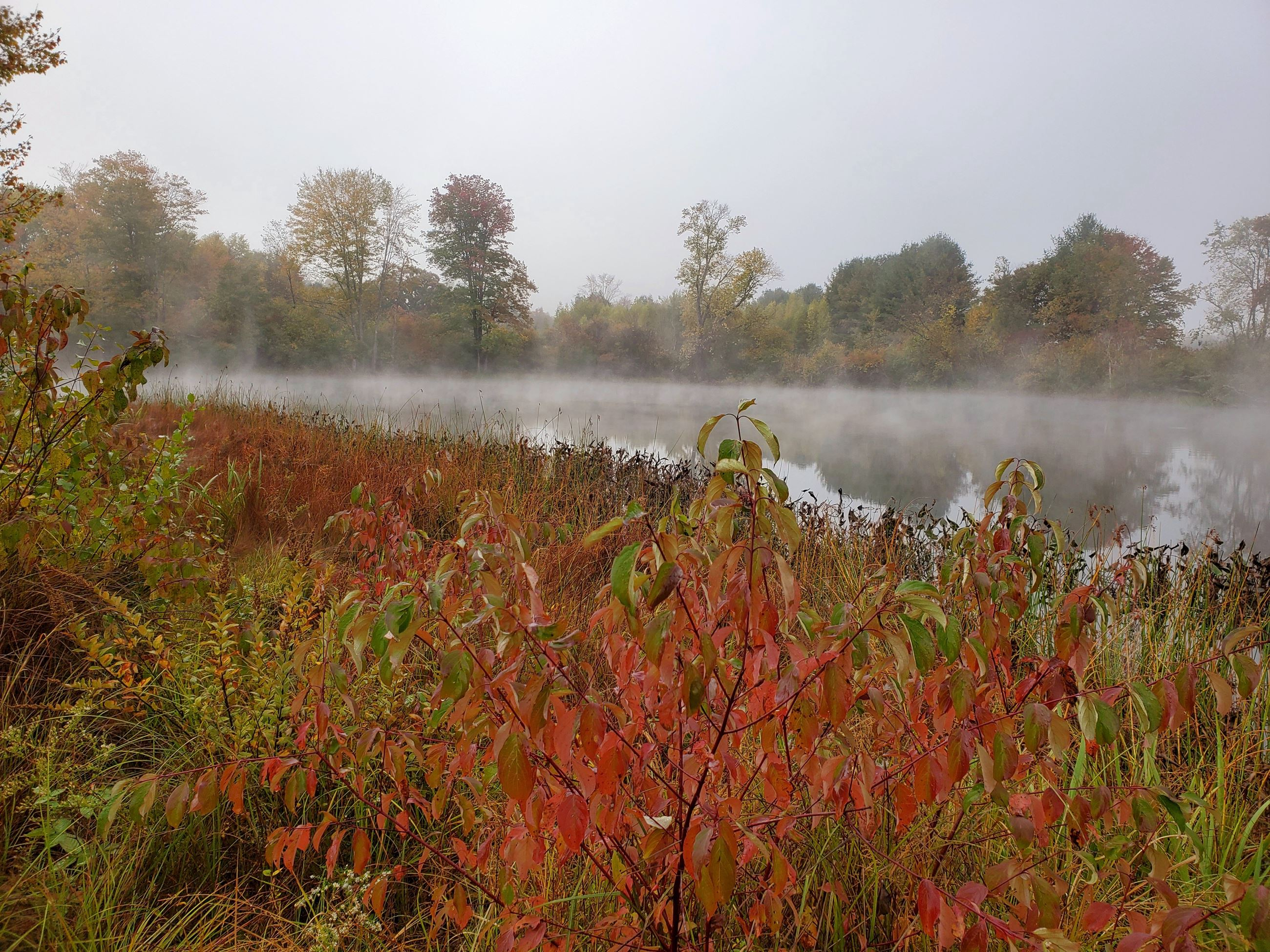 Ellen X. Silverberg - Misty Morning at Wentworth Farm Conservation Area  / Amherst